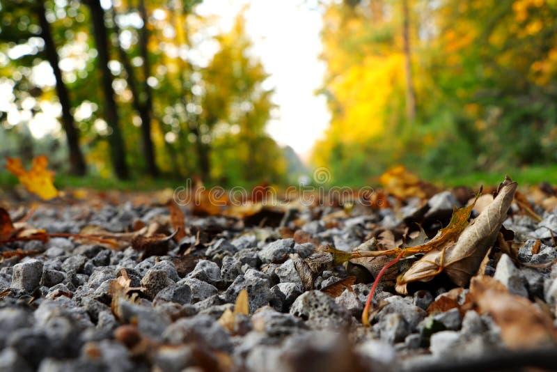 Il freak della natura in strada ceca in strada della ghiaia della foresta in pieno dell'autunno ha colorato il marple delle fogli fotografia stock libera da diritti