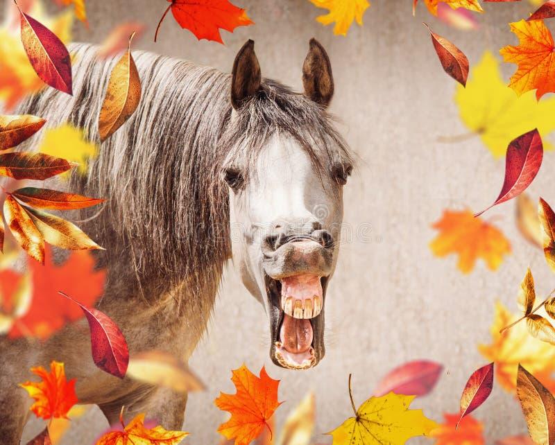 Il fronte del cavallo con Open ha detto lo sguardo in camera, nelle foglie di autunno di caduta della priorità alta fotografia stock libera da diritti
