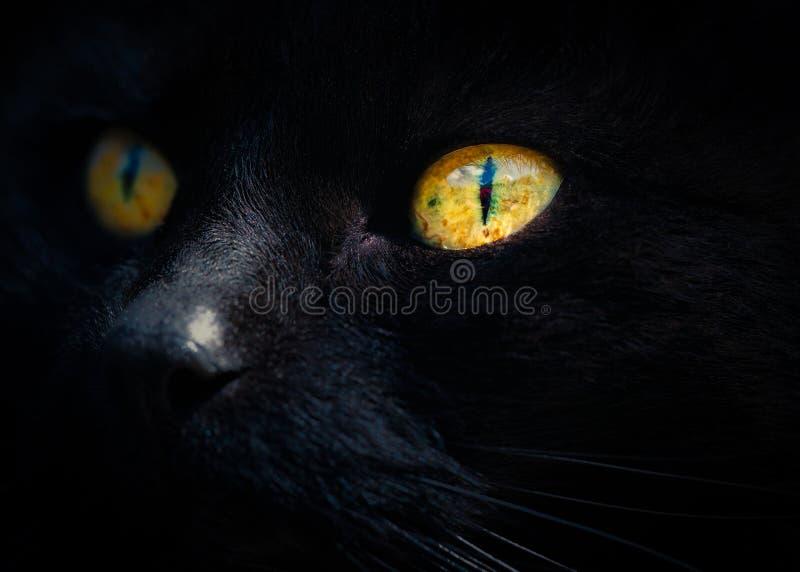 Il fronte del gatto nero dettagliatamente fotografia stock libera da diritti