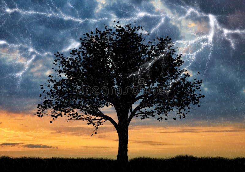 Il fulmine cade in un albero solo fotografia stock libera da diritti