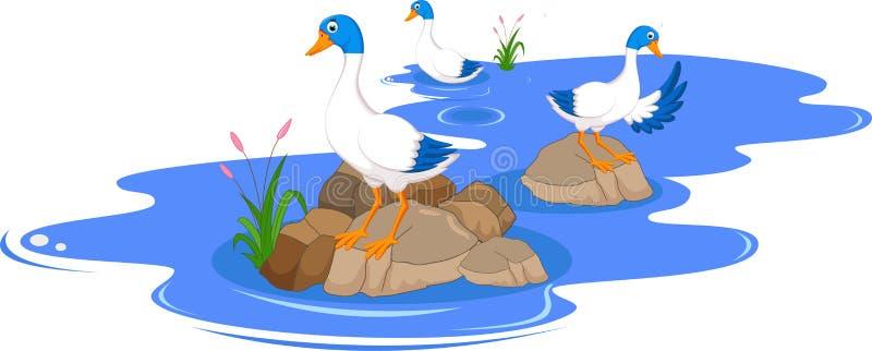 Il fumetto divertente ducks sui precedenti di bianco dello stagno illustrazione vettoriale