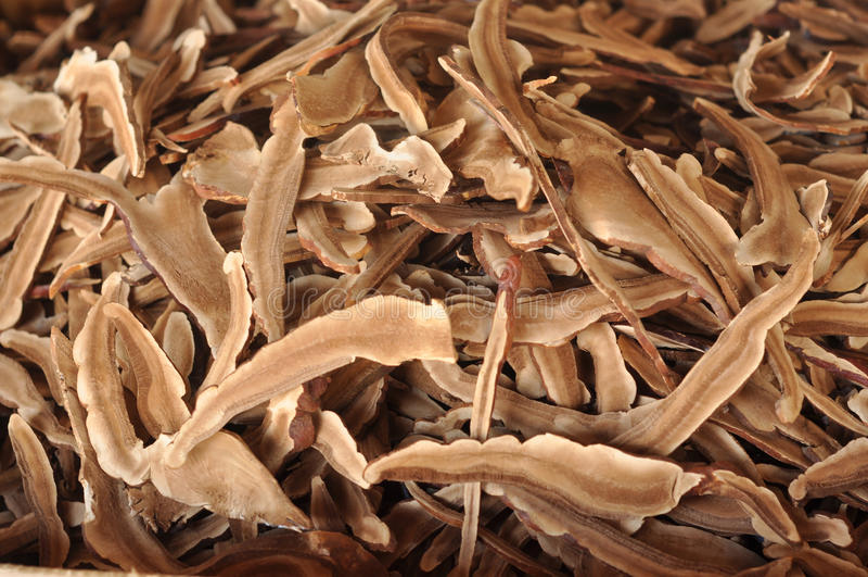Il fungo Lingzhi asciuga molti immagini stock