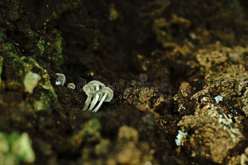 Il fungo si sviluppa sulla corteccia del ` s dell'albero immagine stock libera da diritti