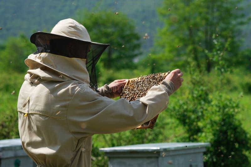 Il funzionamento dell'apicoltore raccoglie il miele apiary Concetto di apicoltura immagini stock libere da diritti