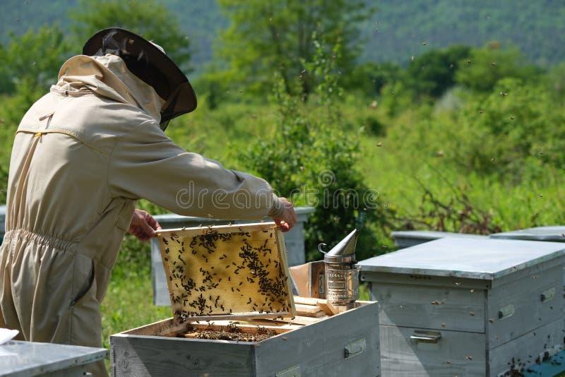 Il funzionamento dell'apicoltore raccoglie il miele apiary Concetto di apicoltura fotografie stock