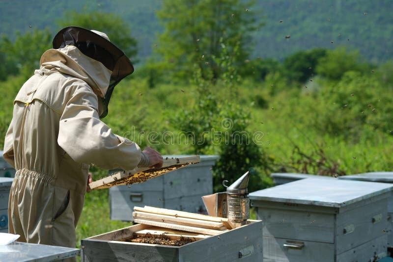 Il funzionamento dell'apicoltore raccoglie il miele apiary Concetto di apicoltura immagine stock libera da diritti