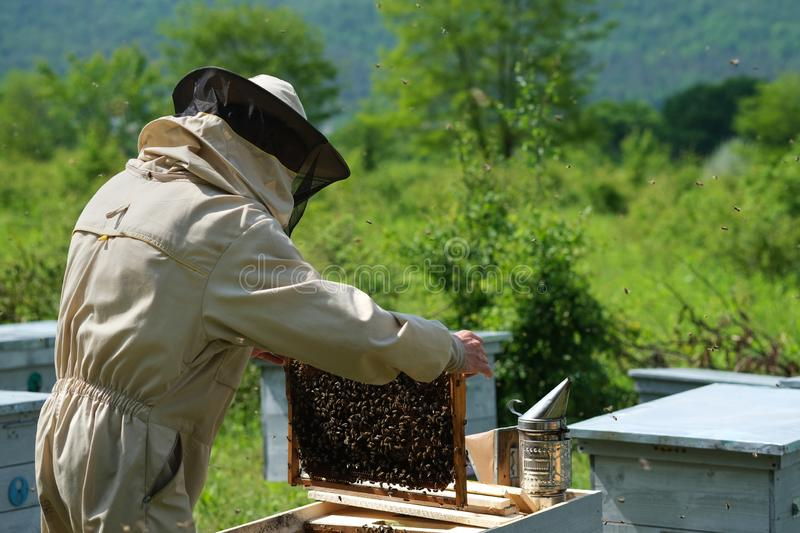 Il funzionamento dell'apicoltore raccoglie il miele apiary Concetto di apicoltura immagine stock