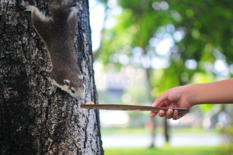 Il funzionamento vago dello scoiattolo del movimento alla mano pensa che può mangiare qualcosa in natura con lo spazio della copi immagine stock libera da diritti