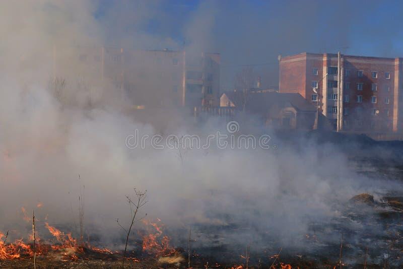 Download Il fuoco brucia l'erba immagine stock. Immagine di pericolo - 55359671