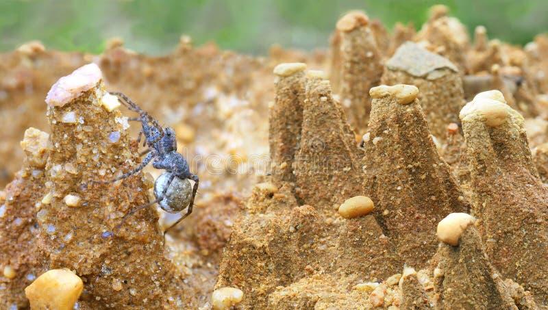 Il fuoco ha impilato il panorama di un ragno femminile in una fiaba miniatura ha eroso il paesaggio di Sandpile fotografie stock