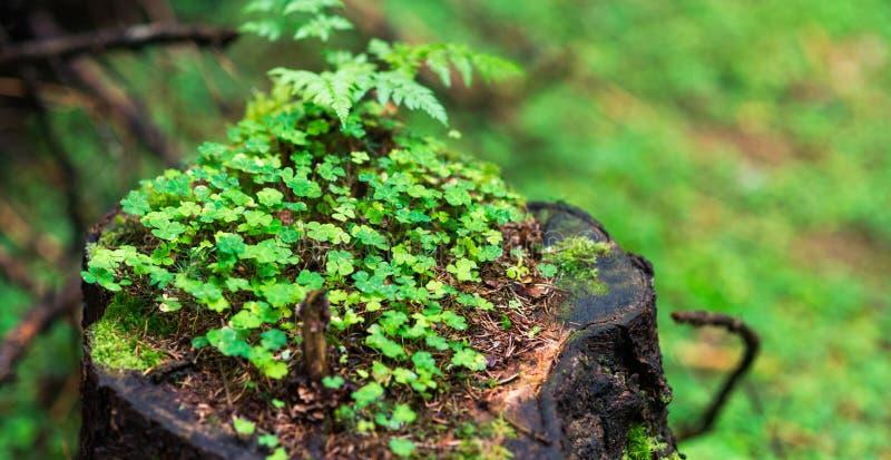 Il futuro del fondo della natura, l'ecologia, conserva la natura del pianeta fotografie stock libere da diritti