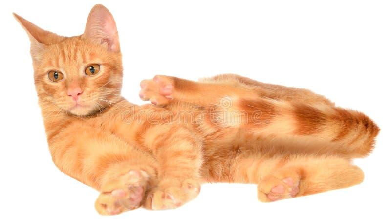 Il gattino arancio mette su una vista laterale fotografie stock libere da diritti
