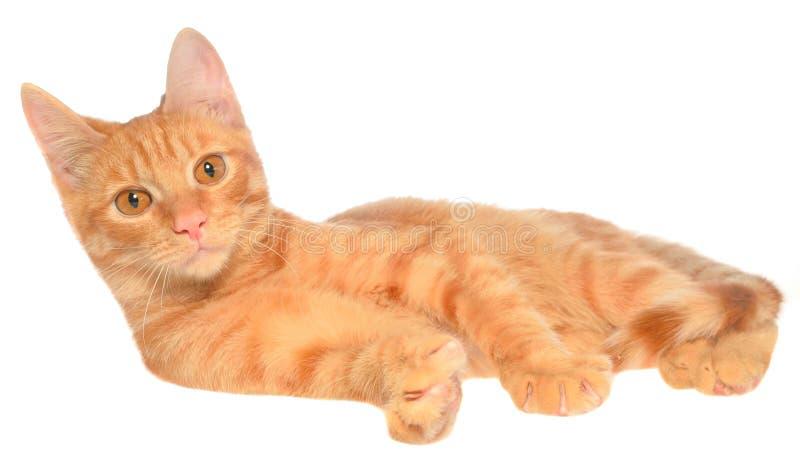 Il gattino arancio mette su una vista laterale immagine stock