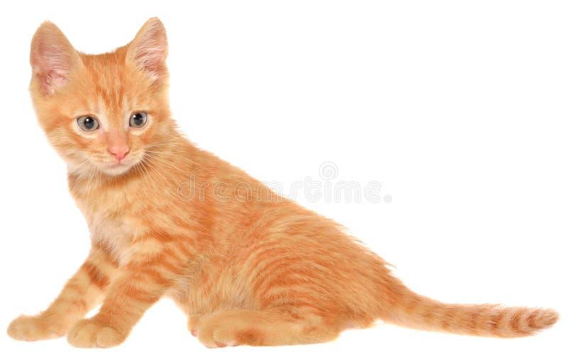 Il gattino arancio va immagini stock