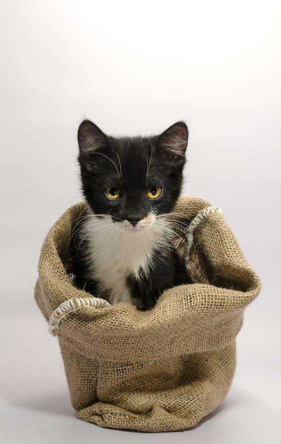 Il gattino in bianco e nero con gli occhi gialli si siede nel colpo b della tela di sacco fotografia stock libera da diritti