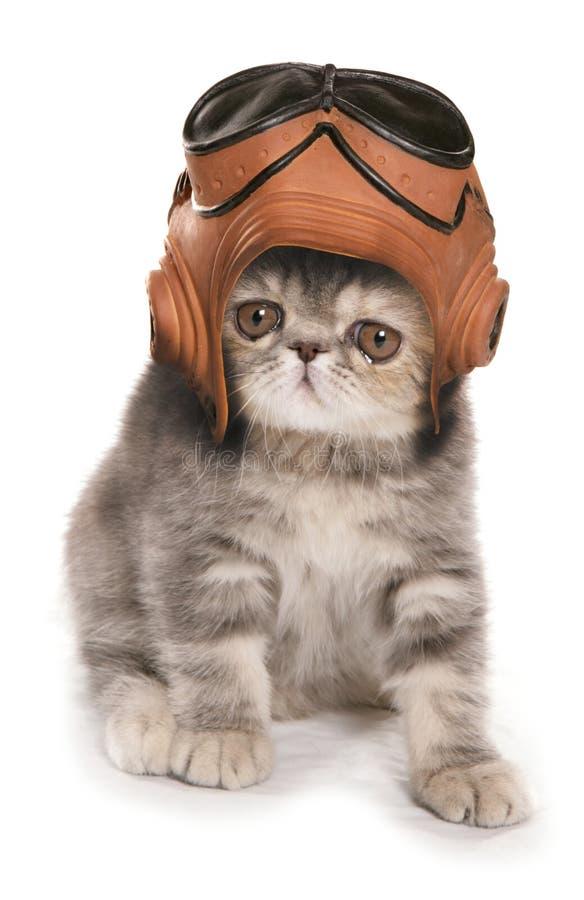 Il gattino che indossa il casco d'annata di RAF e googla fotografia stock libera da diritti