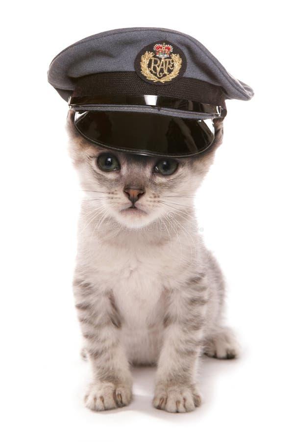 Il gattino che indossa la RAF pilota il cappello fotografie stock libere da diritti