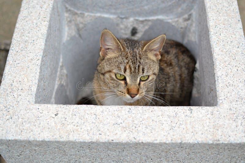 Il gattino del soriano hiden in vaso di fiore fotografia stock
