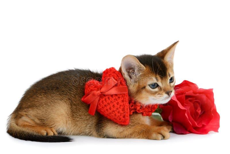 Il gattino di tema del biglietto di S. Valentino con cuore rosso ed è aumentato fotografie stock libere da diritti