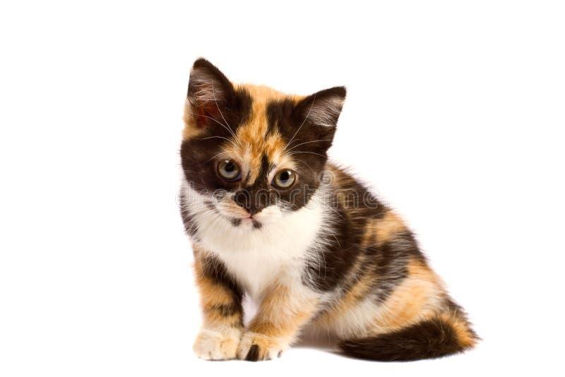 Il gattino di tristezza si siede fotografia stock libera da diritti