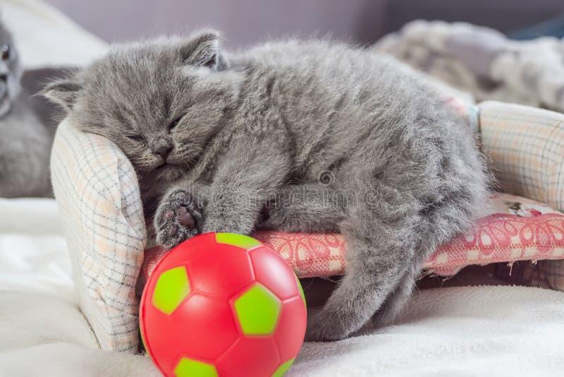 Il gattino gioca con una palla fotografia stock