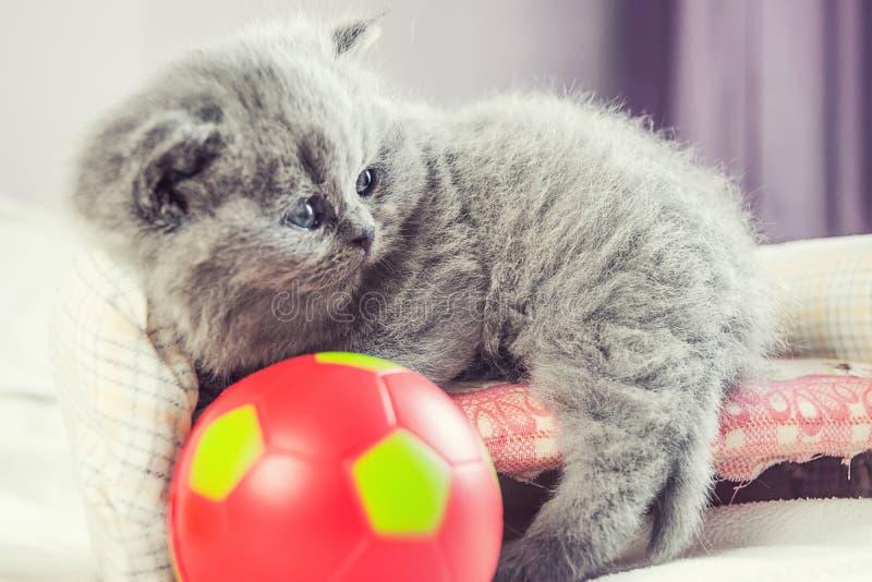 Il gattino gioca con una palla fotografie stock