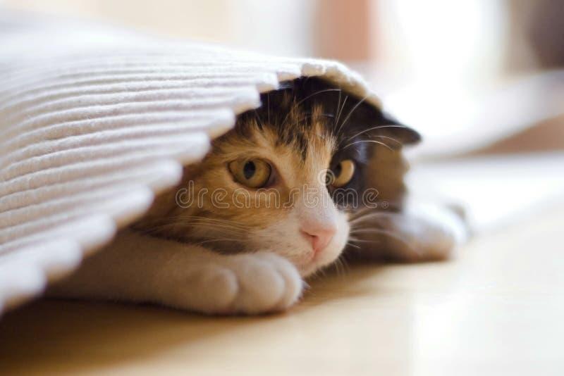 Il gattino malato di nostalgia fotografie stock libere da diritti
