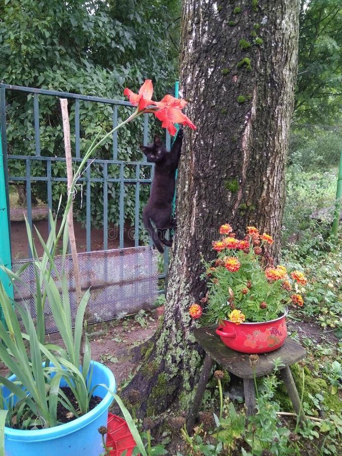 Il gattino nero scala un albero fotografia stock