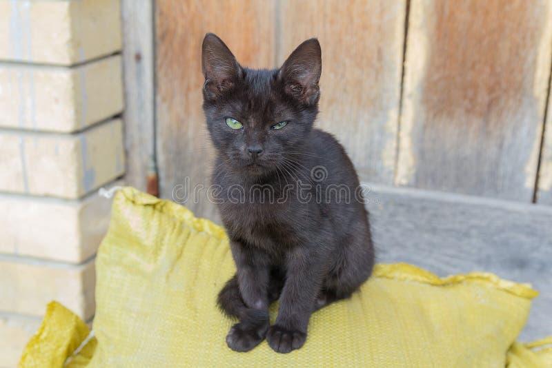 Il gattino nero senza tetto si siede vicino ad un granaio immagine stock libera da diritti