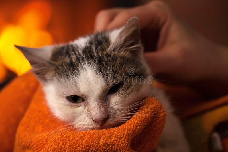 Il gattino salvato poco dopo la pulizia gode di una coperta e di una c morbide immagini stock