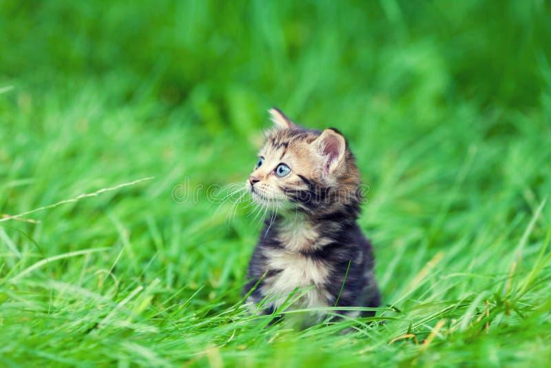 Il gattino si siede sull'erba fotografia stock libera da diritti