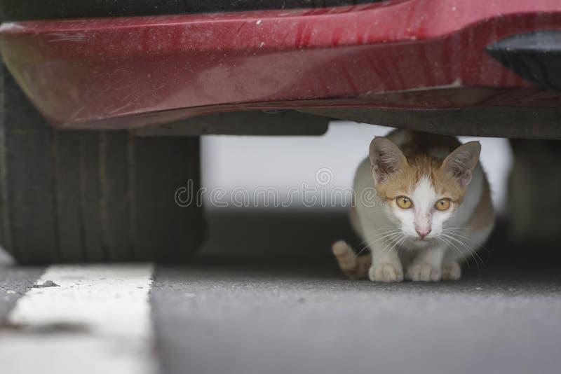 Il gattino sotto l'automobile rossa fotografie stock libere da diritti