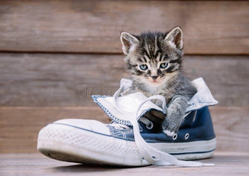 Il gattino sta sedendosi in una scarpa fotografia stock libera da diritti