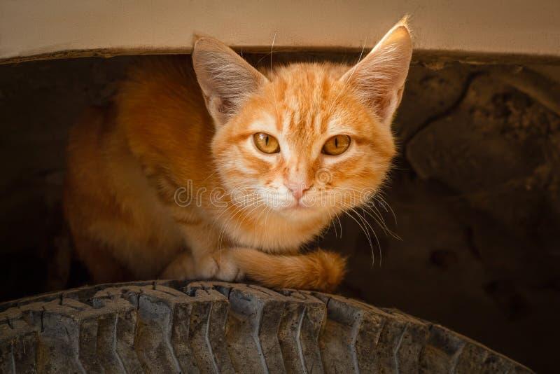 Il gattino a strisce dello zenzero si siede sulla ruota di un'automobile sotto l'ala immagini stock libere da diritti