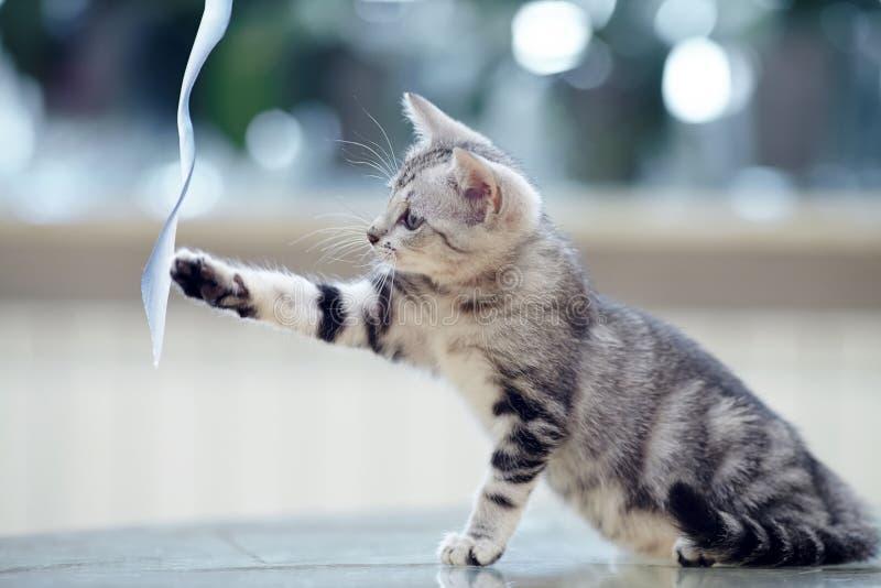Il gattino a strisce gioca con nastro adesivo fotografia stock