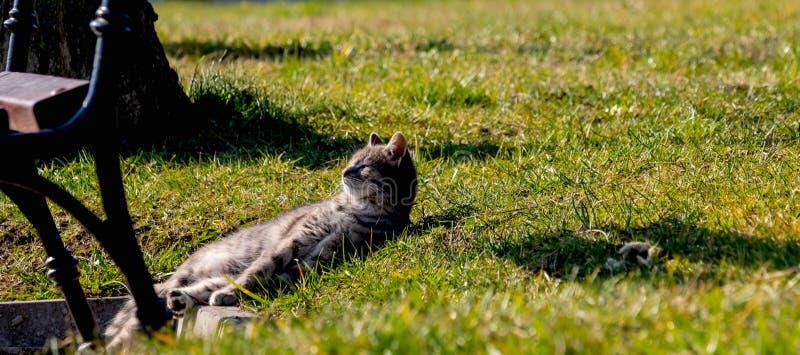 Il gattino a strisce sveglio si trova sull'erba verde nel parco, è godente e riscaldante sui raggi luminosi del sole dell'estate fotografia stock libera da diritti
