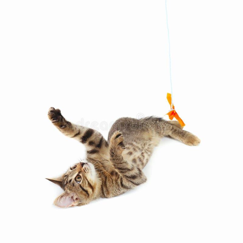 Il gattino sveglio è giocato con un arco di carta arancio su fondo bianco fotografia stock
