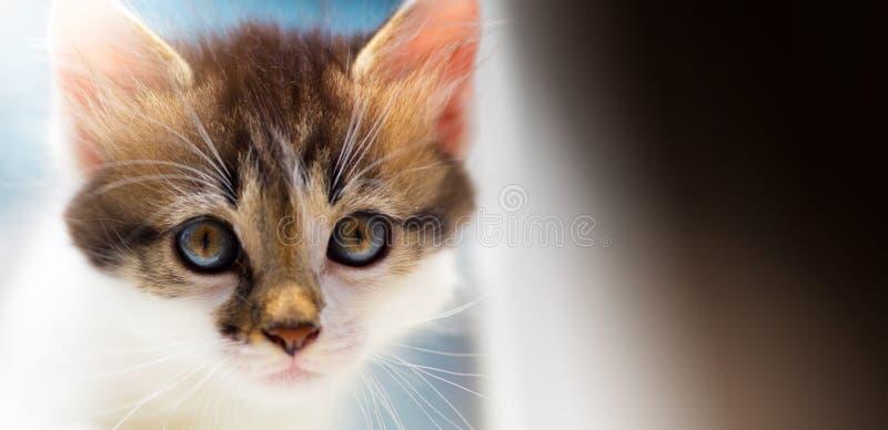 Il gattino sveglio di Art Lost Lone sta cercando un ospite immagine stock libera da diritti