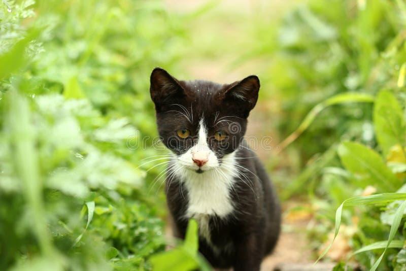 Il gattino triste sta sedendosi dal lato dell'erba immagine stock