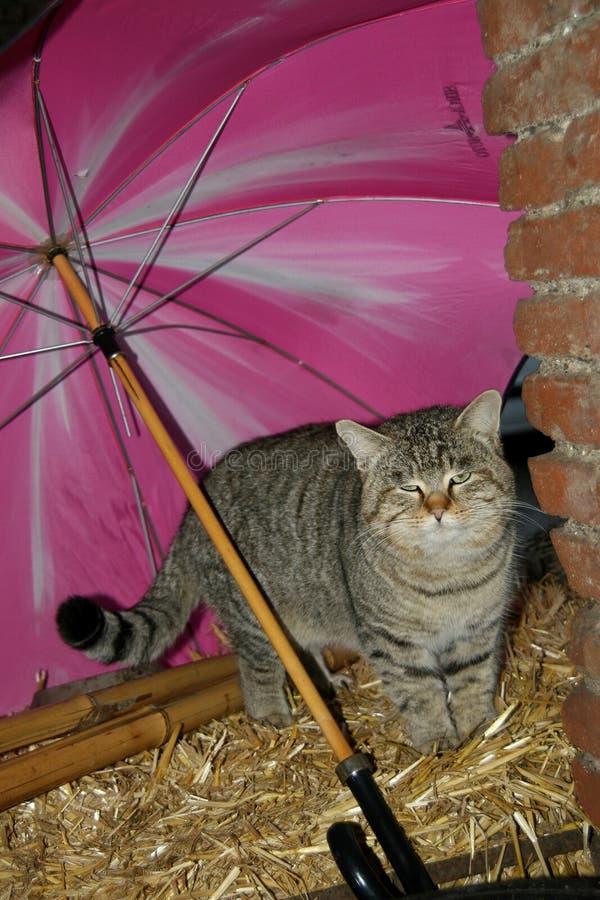 Il gatto è riparato dalla pioggia immagine stock libera da diritti