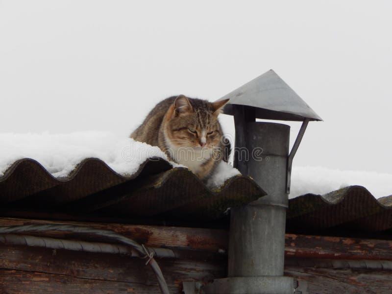 Il gatto è riscaldato vicino al camino immagine stock libera da diritti