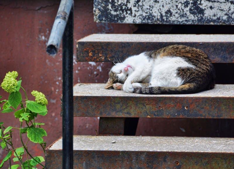 Il gatto è sonni sulle scale fotografia stock libera da diritti