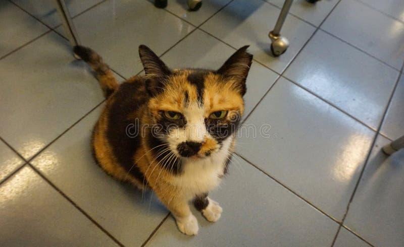 Il gatto è spaventato e silenzioso fotografie stock