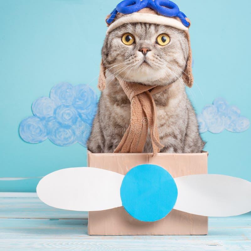 Il gatto è un pilota sveglio dell'aviatore in un aereo di carta, un Whiskas scozzese in maschera e vetri di un pilota dell'aeropl immagine stock