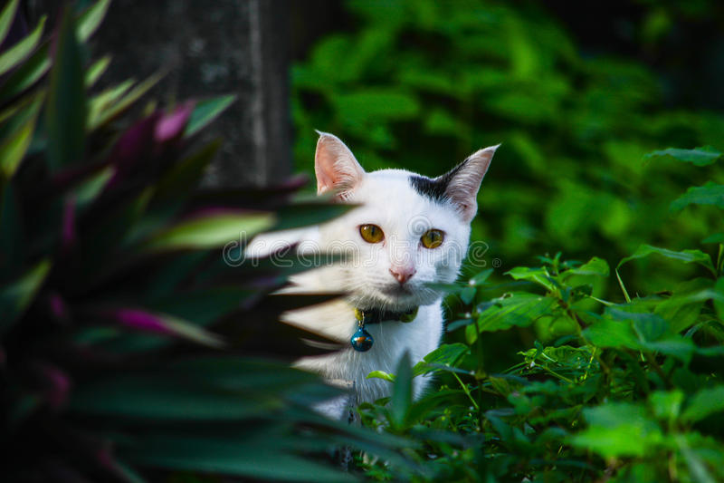 Il gatto fotografie stock