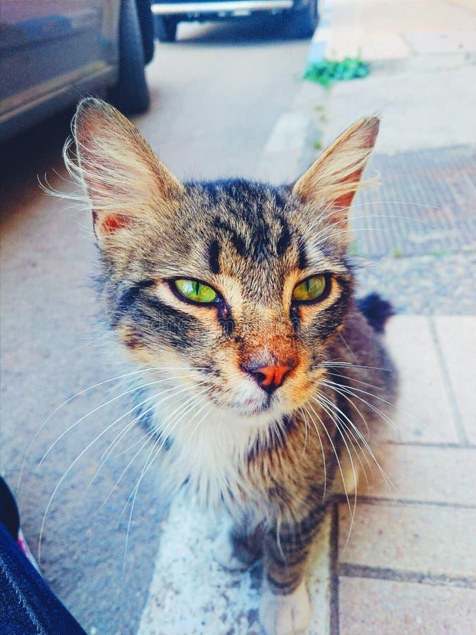 Il gatto adorabile fotografia stock