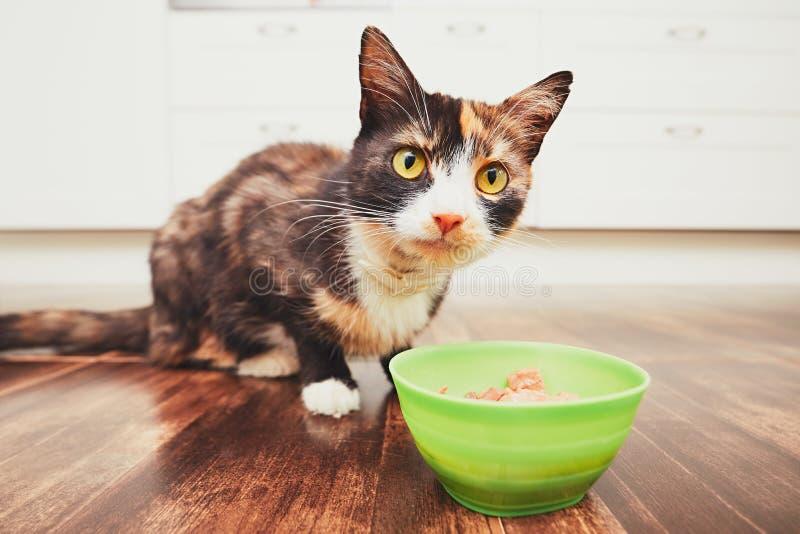 Il gatto affamato che mangia dalla ciotola fotografia stock