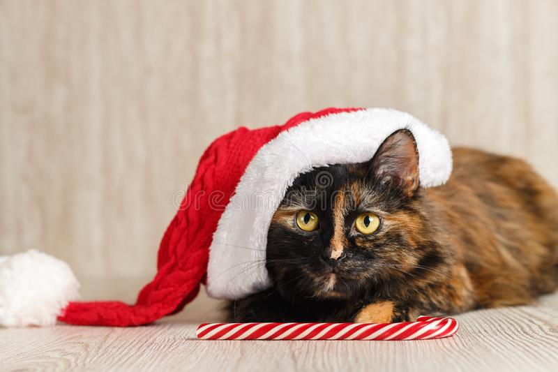 Il gatto allegro in un cappello di Natale cerca e si trova vicino alla caramella fotografie stock libere da diritti