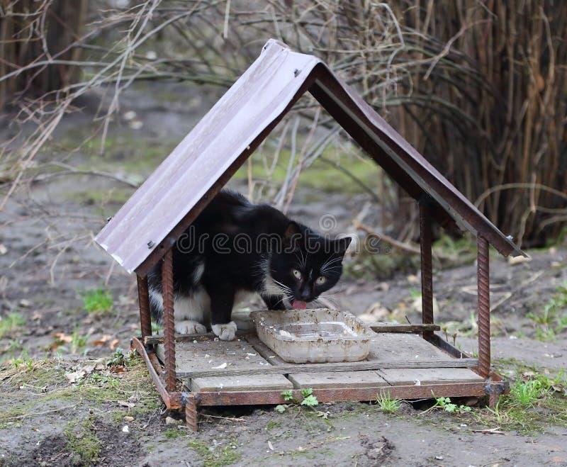 Il gatto in bianco e nero ? alimentato da un alimentatore casalingo della via fotografie stock