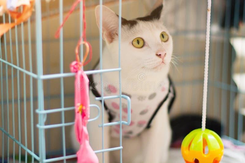 Il gatto bianco gode di e sedendosi in scatola della gabbia fotografia stock libera da diritti